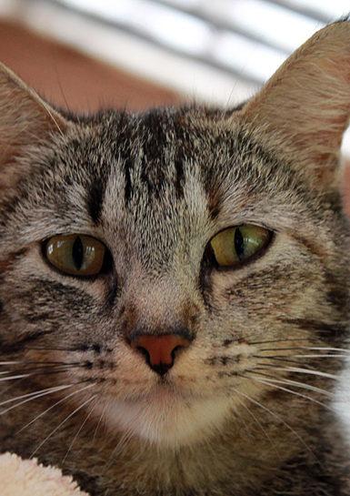Cat Adoption Month