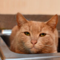 The Case Against Cat Declawing