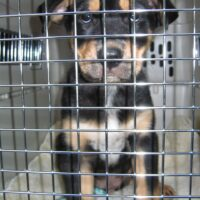 The Case Against Dog Crating