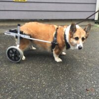 Special Needs, Special Pets