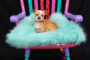 """""""Take a Seat for Animals – A Wine Tasting and Painted Chair Auction"""""""