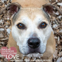 11 Great Reasons to Open Your Heart and Home to a Senior Pet