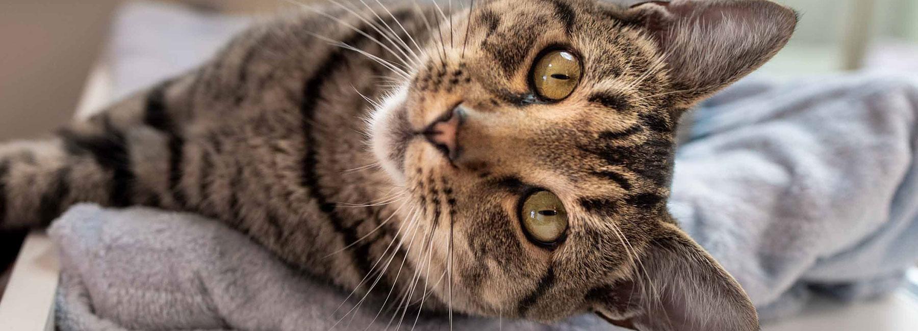 kitten-sideways