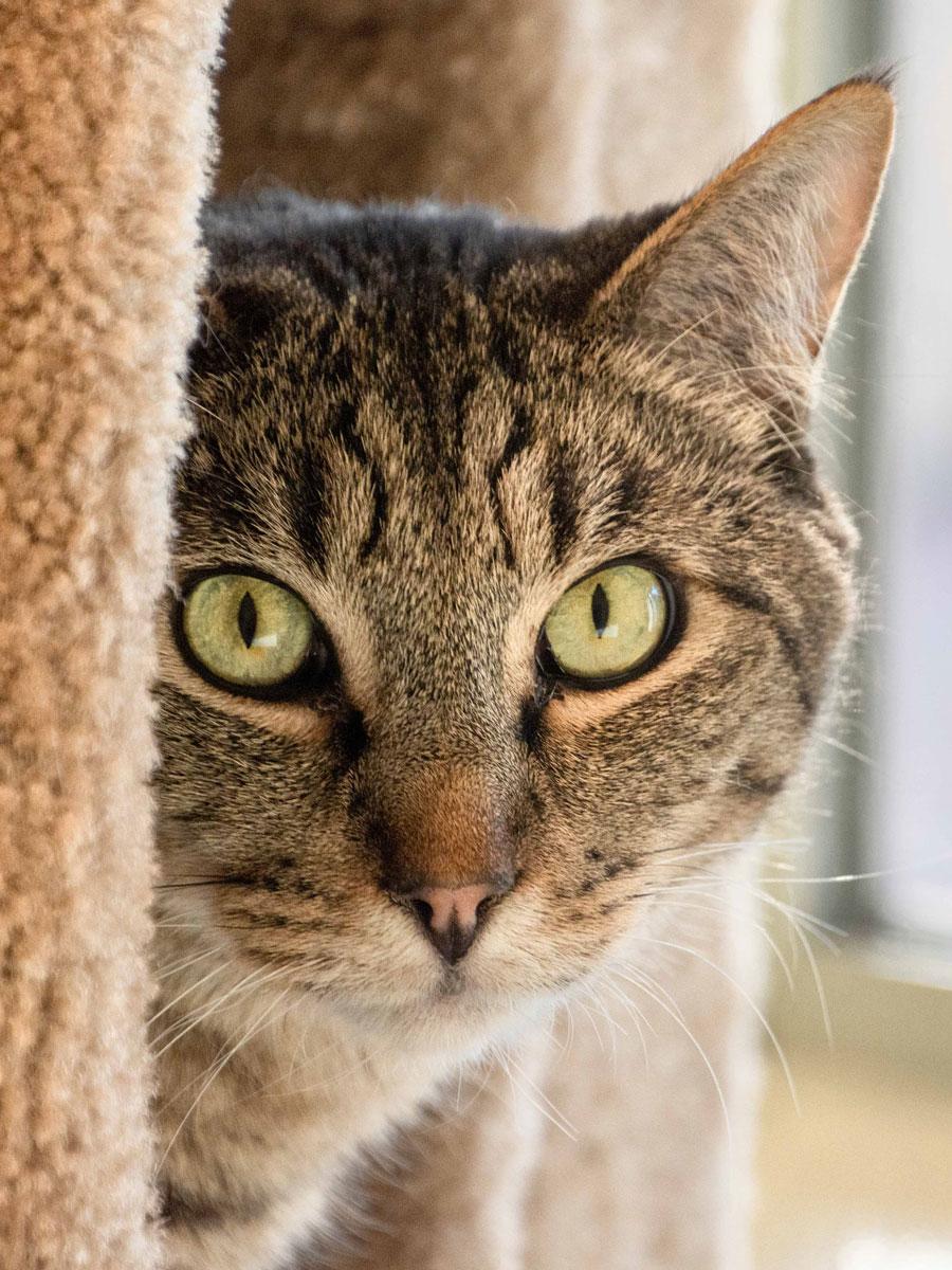 Cat Peekaboo