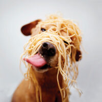 2022 Spay-ghetti Dinner, Save the Date!