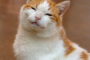 """Pet of the Week """"Connor"""" (In Loving Memory)"""